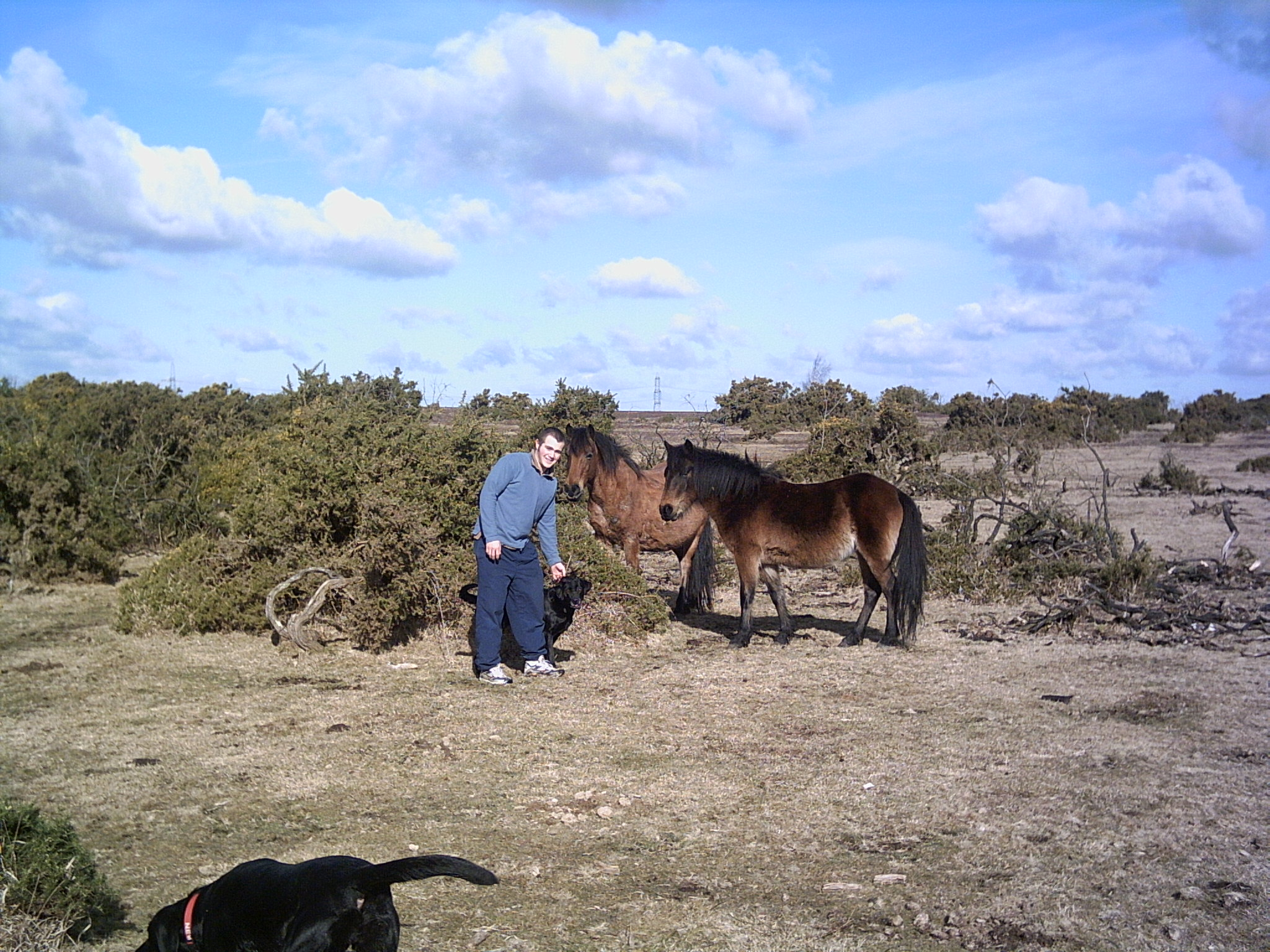 New forest 013
